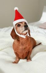 Happy Howlidays santa hat