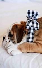 Fancy Pants pet bow tie collar in black check